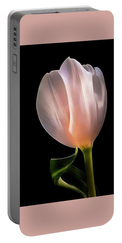 Tulip Portable Battery Charger featuring the photograph Tulip In Light by Phyllis Meinke