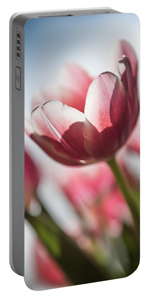 Tulip Photograph Portable Battery Charger featuring the photograph Pink Tulip Closeup by Mike Organ