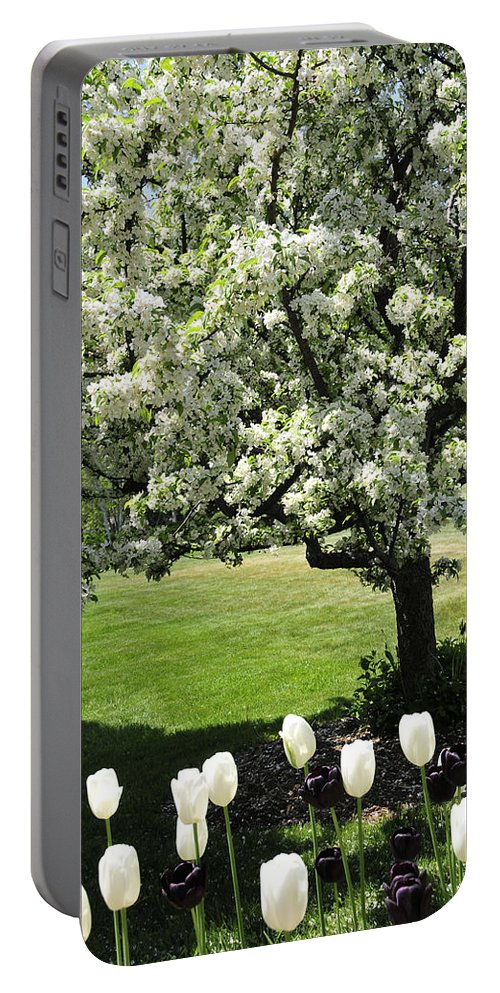 Flowering Tree Portable Battery Charger featuring the photograph Tulips And Tees by David Arment