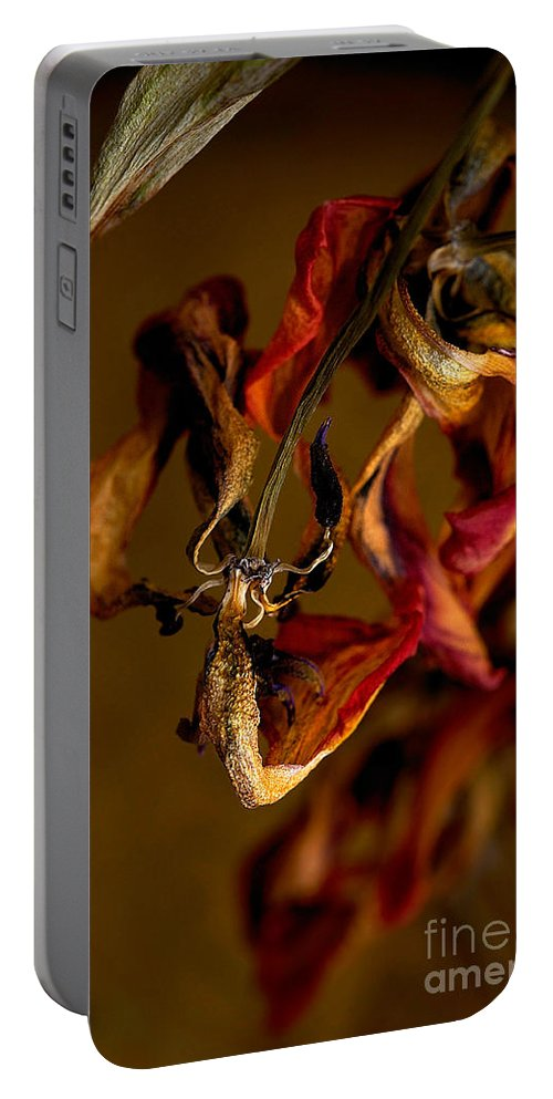 Red Tulip Portable Battery Charger featuring the photograph Tulip's Demise - A Natural Abstract by Lois Bryan