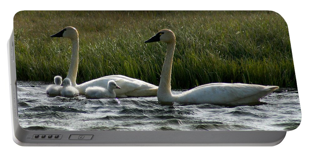 Swans Portable Battery Charger featuring the photograph Tundra Swans And Cygents by Anthony Jones