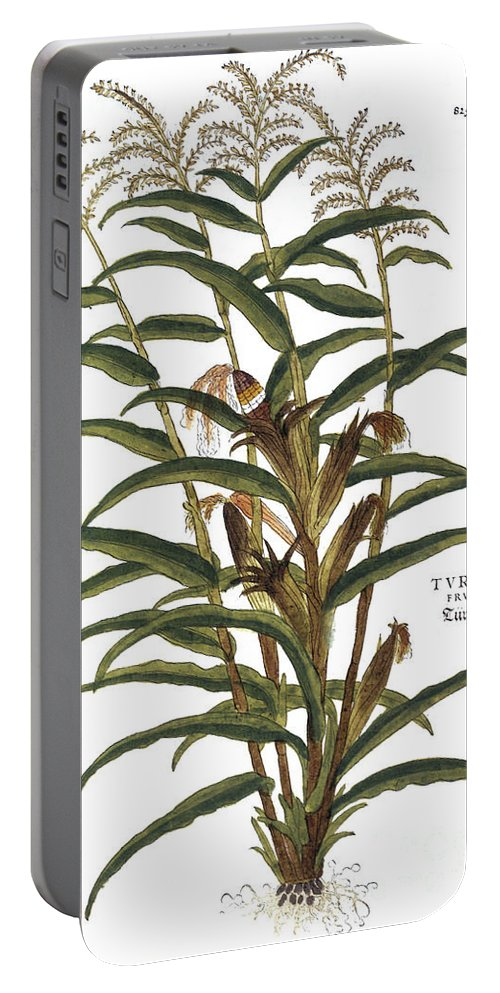 1730s Portable Battery Charger featuring the photograph Turkish Corn, 1735 by Granger