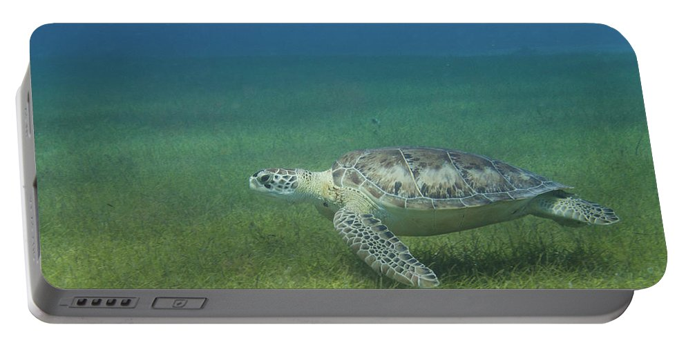 Turtle Portable Battery Charger featuring the photograph Turtle Cove Glide by Rob Lantz
