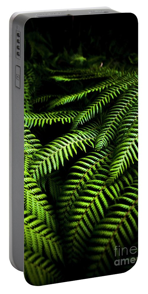 Fern Portable Battery Charger featuring the photograph Twilight Rainforest Fern by Jorgo Photography - Wall Art Gallery