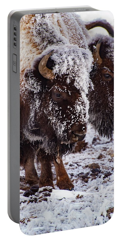 Yellowstone National Park Portable Battery Charger featuring the photograph Twins by Bob Phillips