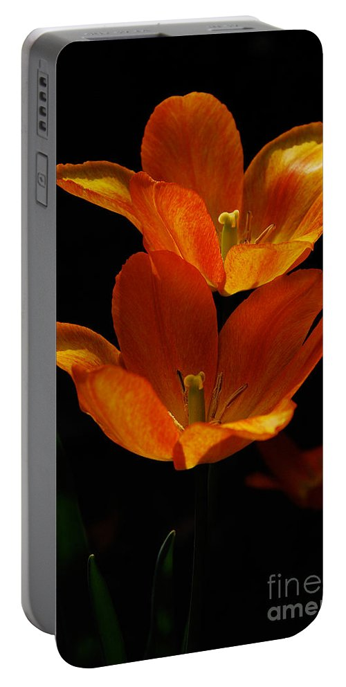 Lois Bryan Portable Battery Charger featuring the photograph Twins by Lois Bryan
