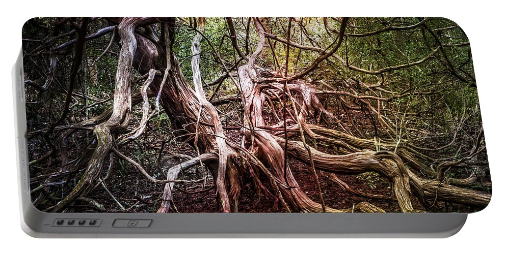 Fall Portable Battery Charger featuring the photograph Twisted by Debra and Dave Vanderlaan