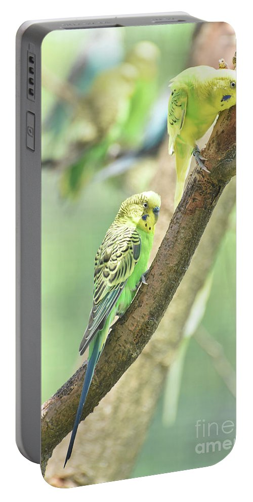 Budgie Portable Battery Charger featuring the photograph Two Adorable Budgie Parakeets Living In Nature by DejaVu Designs