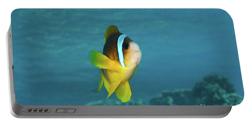 Coral Portable Battery Charger featuring the photograph Two-banded Clownfish by Hagai Nativ