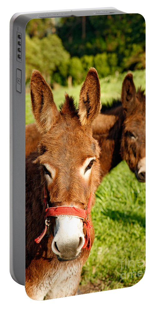 Animals Portable Battery Charger featuring the photograph Two Donkeys by Gaspar Avila