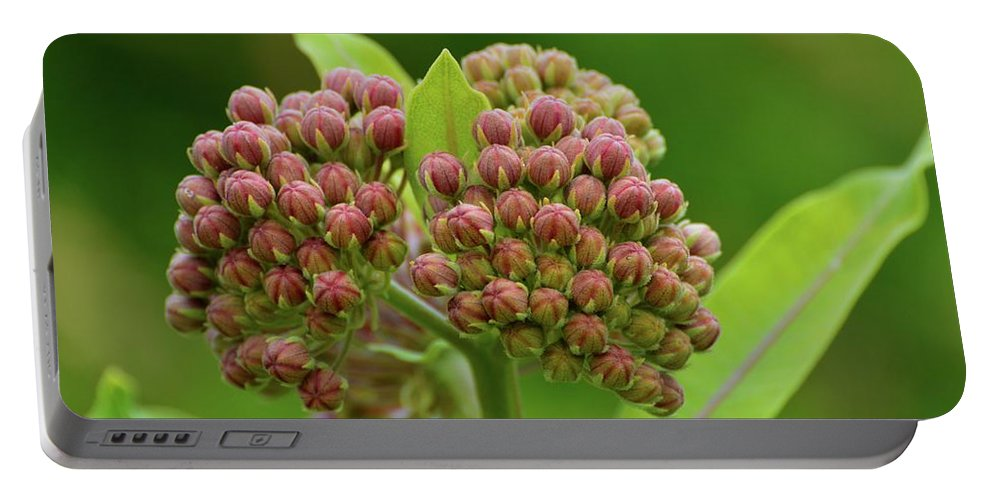 Nature Portable Battery Charger featuring the photograph Two Milkweed Flowers Buds by Lyle Crump