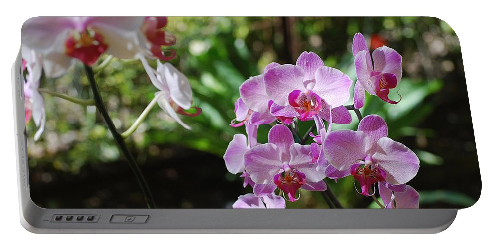 Orchid Portable Battery Charger featuring the photograph Two Orchid Branches Number One by Heather Kirk