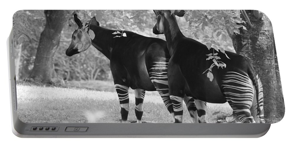 Animal Portable Battery Charger featuring the photograph Two Stipers In Black And White by Rob Hans