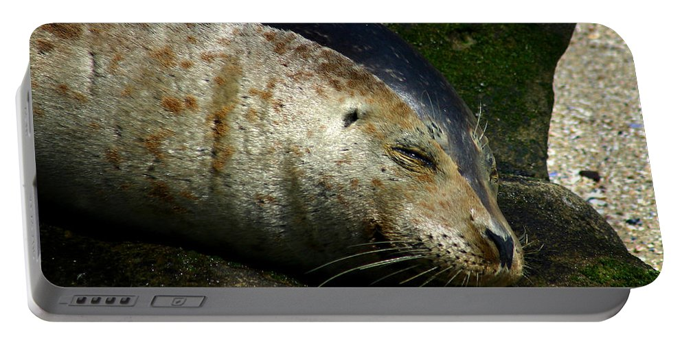 Seal Portable Battery Charger featuring the photograph Two Tone Seal by Anthony Jones