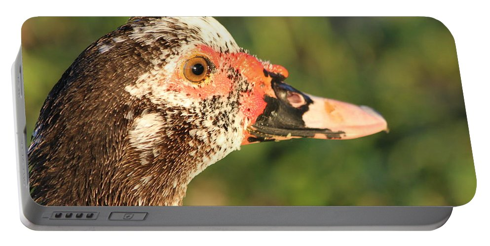 Duck Portable Battery Charger featuring the photograph Ugly Duck by Lauri Novak