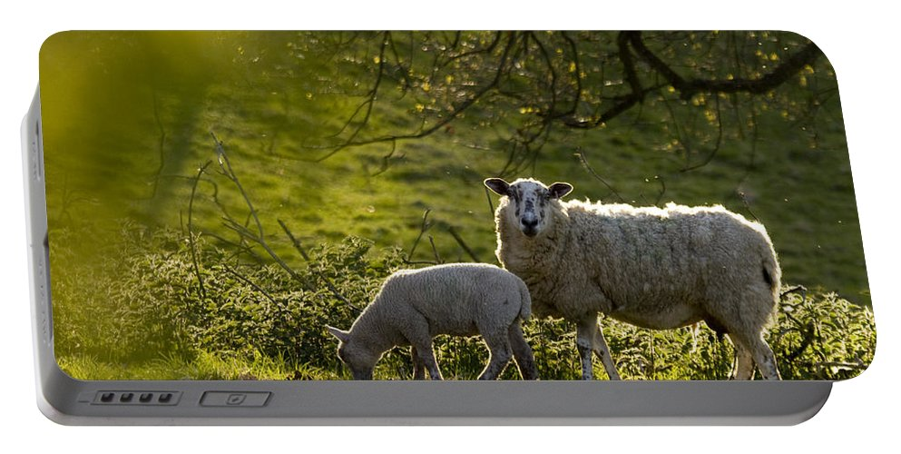 Lamb Portable Battery Charger featuring the photograph Under The Setting Sun by Angel Ciesniarska
