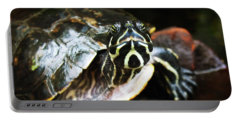 Turtle Art Print Portable Battery Charger featuring the photograph Underwater Turtle by Patricia Griffin Brett