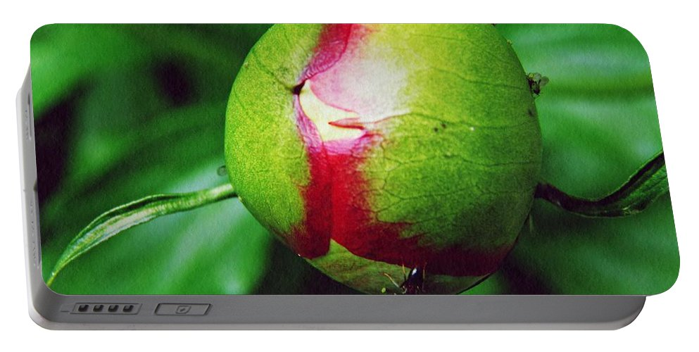 Peony Portable Battery Charger featuring the photograph Unexploded Peony by Sarah Loft