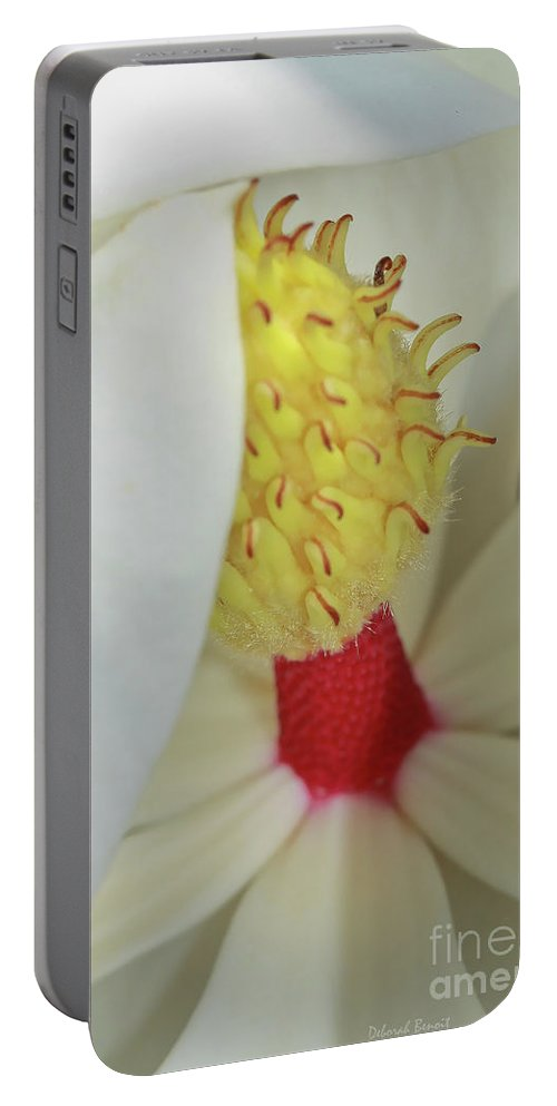Magnolia Bud Portable Battery Charger featuring the photograph Unfolding Beauty by Deborah Benoit