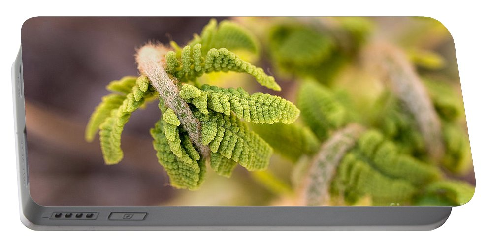 Nature Portable Battery Charger featuring the photograph Unfolding Fern Leaf by Louise Heusinkveld