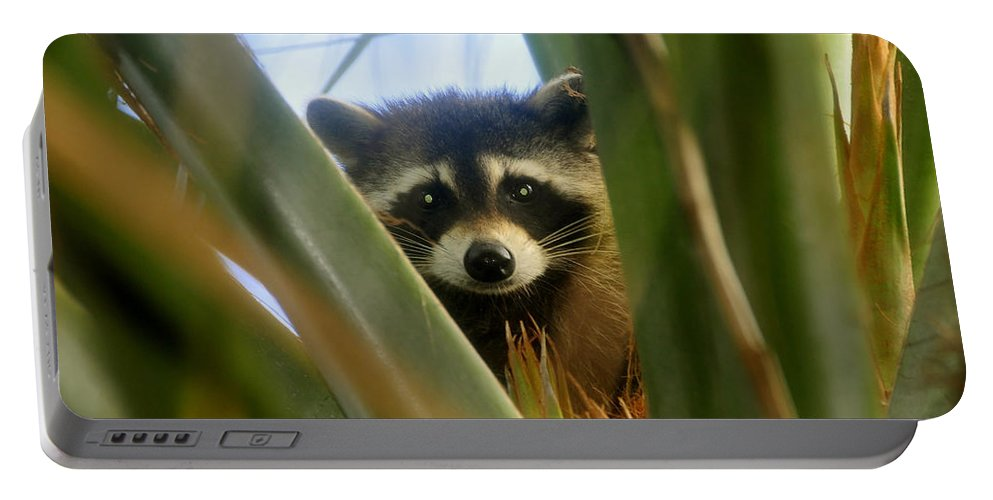 Raccoon Portable Battery Charger featuring the photograph Up A Tree by David Lee Thompson