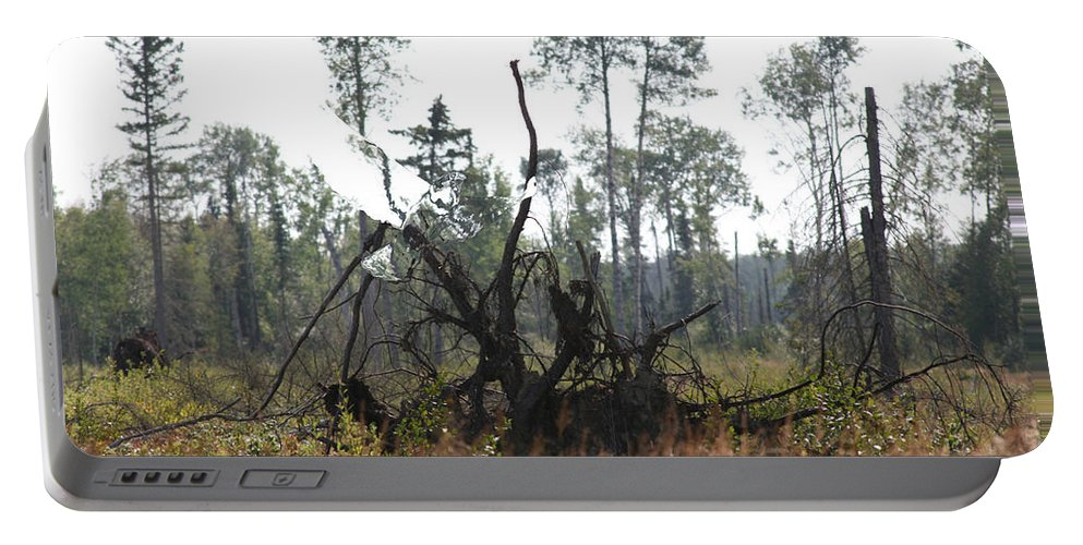 Roots Tree Stump Hawk Bird Wild Forest Nature Feeling Abstract Portable Battery Charger featuring the photograph Uprooted by Andrea Lawrence