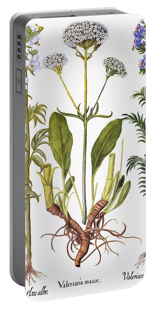 1613 Portable Battery Charger featuring the photograph Valerian Flowers, 1613 by Granger