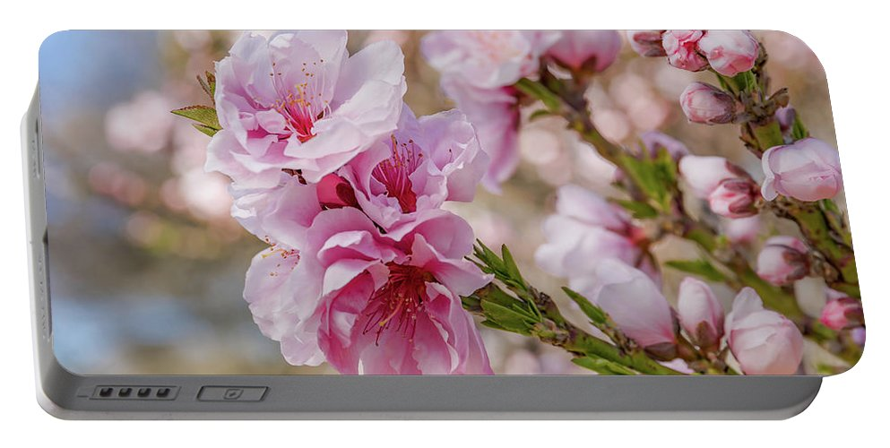 Ornamental Peach Spring Flowers Macro Pink Flora Floral Portable Battery Charger featuring the photograph Valley Blossoms by Ao Images