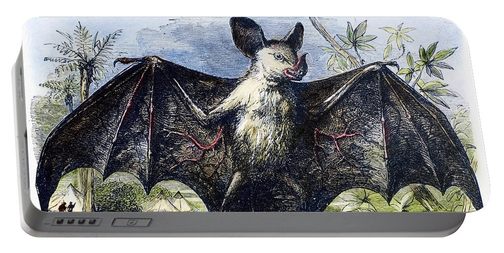 19th Century Portable Battery Charger featuring the photograph Vampire Bat by Granger