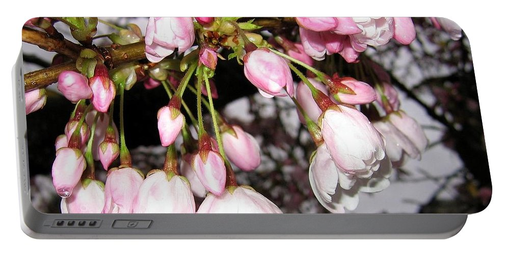Cherry Blossoms Portable Battery Charger featuring the photograph Vancouver Cherry Blossoms by Will Borden