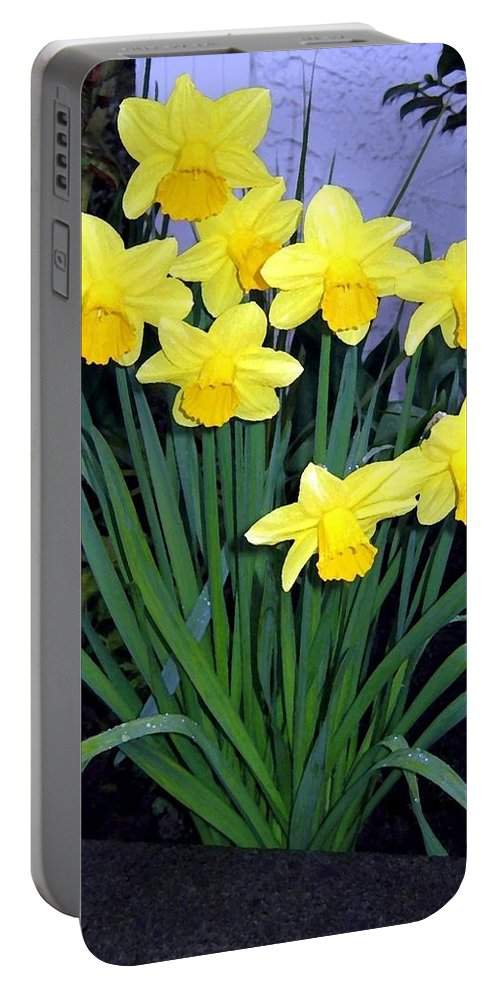 Daffodils Portable Battery Charger featuring the digital art Vancouver Daffodils by Will Borden