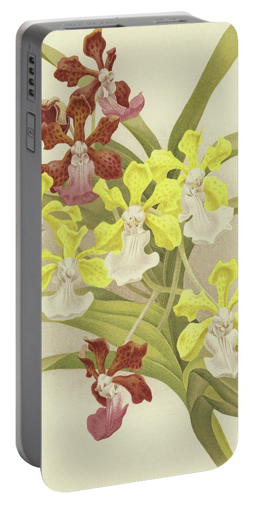 Vanda Insignis Portable Battery Charger featuring the painting Vanda Insignis And Var Scroederiana by English School