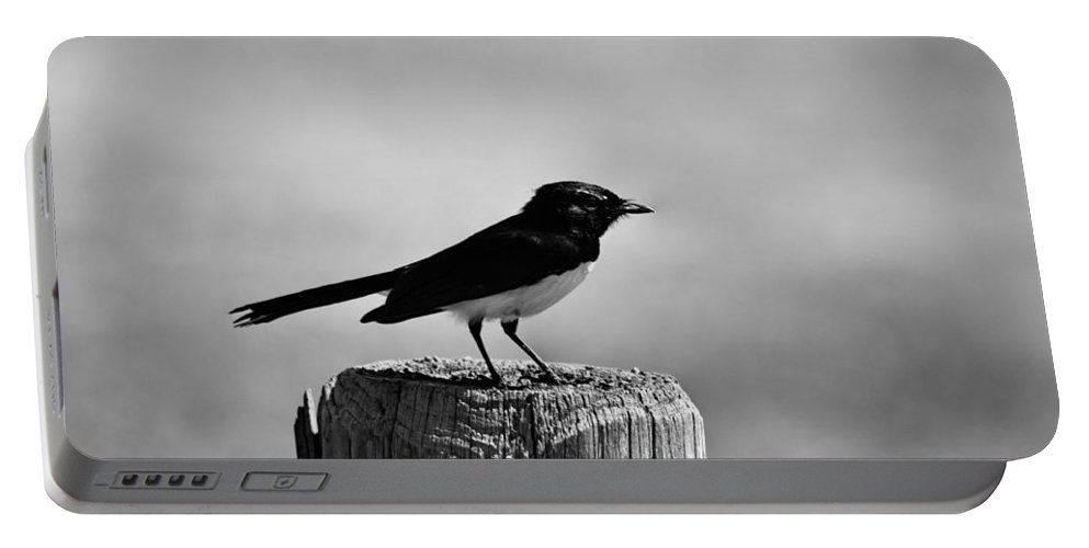 Willy Wagtail. Bird Portable Battery Charger featuring the photograph Vantage Point V4 by Douglas Barnard