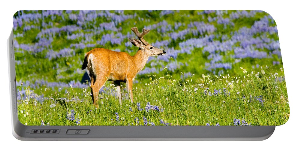 Deer Portable Battery Charger featuring the photograph Velvet On Lupine by Mike Dawson