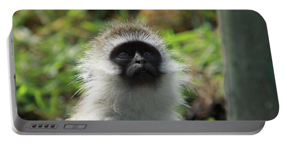 Vervet Monkey Portable Battery Charger featuring the photograph Vervet Monkey by Aidan Moran