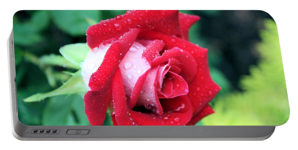 Rose Portable Battery Charger featuring the photograph Very Dewy Rose by Kristin Elmquist