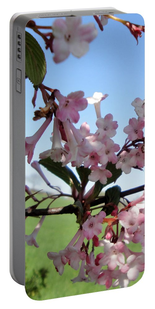 Nature Portable Battery Charger featuring the photograph Vibernum Pink Dawn by Susan Baker
