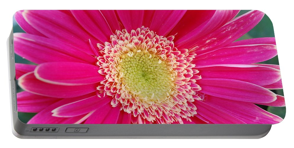 Flower Portable Battery Charger featuring the photograph Vibrant Pink Gerber Daisy by Amy Fose