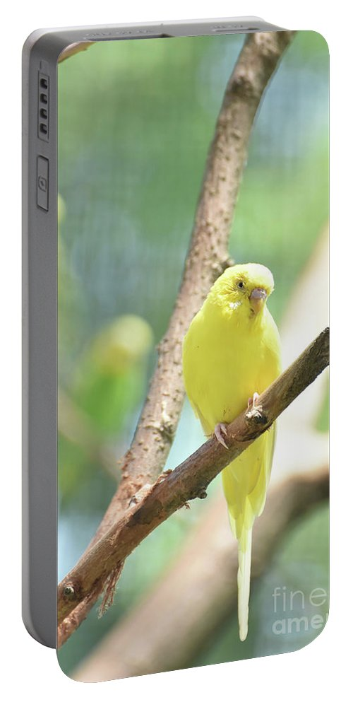Budgie Portable Battery Charger featuring the photograph Vibrant Yellow Budgie Parakeet In The Summer by DejaVu Designs