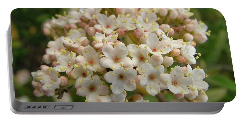 Flower Portable Battery Charger featuring the photograph Haw by Peter Antos