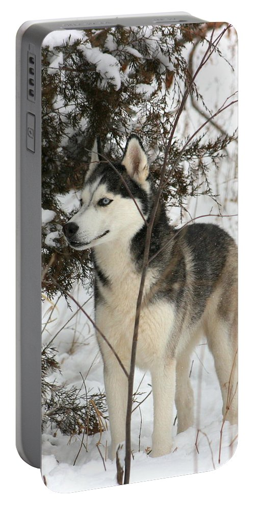 Animal Portable Battery Charger featuring the photograph Vigilant by David Dunham