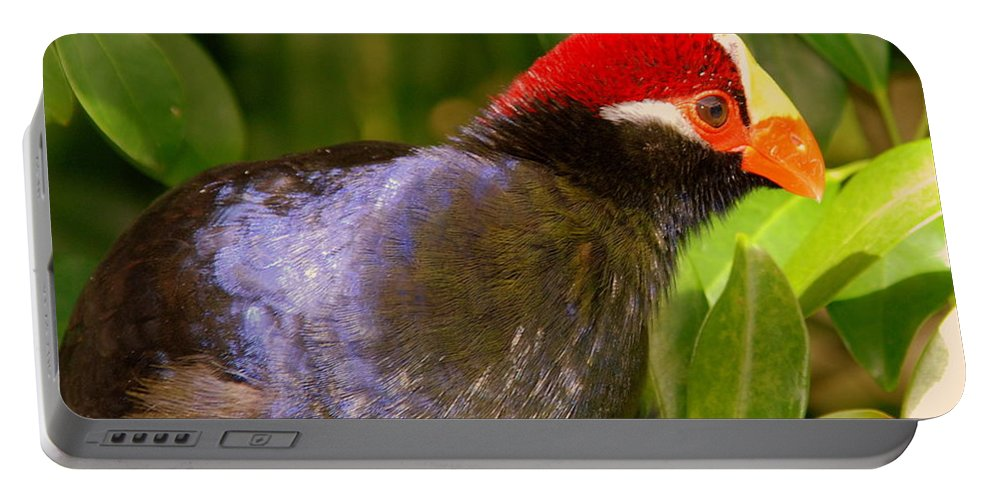 Violet Plantain Eater Portable Battery Charger featuring the photograph Violet Plantain Eater by Susanne Van Hulst