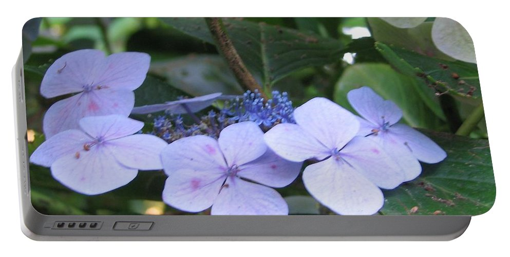 Violets Portable Battery Charger featuring the photograph Violets O The Green by Kelly Mezzapelle