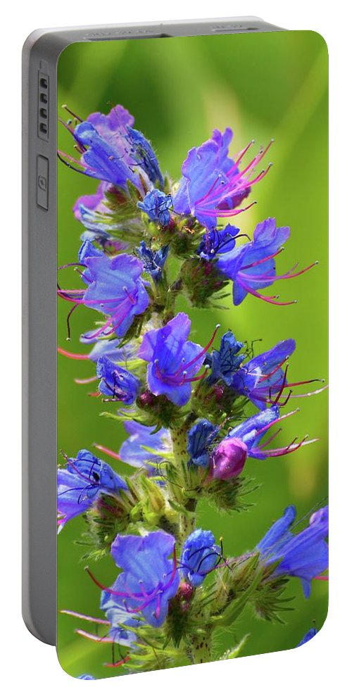 Viper's Bugloss Portable Battery Charger featuring the photograph Viper's Bugloss by Lyle Crump