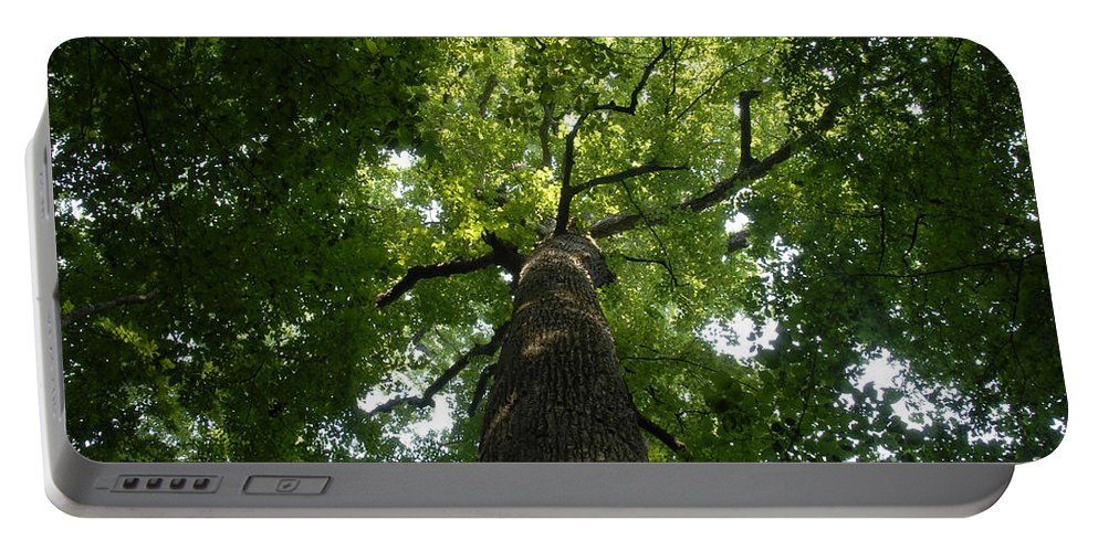Joyce Kilmer Memorial Forest Portable Battery Charger featuring the photograph Virgin Canopy by David Lee Thompson