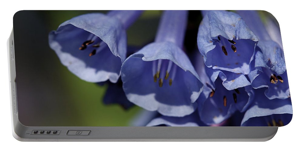 Background Portable Battery Charger featuring the photograph Virginia Bluebells by Jack R Perry