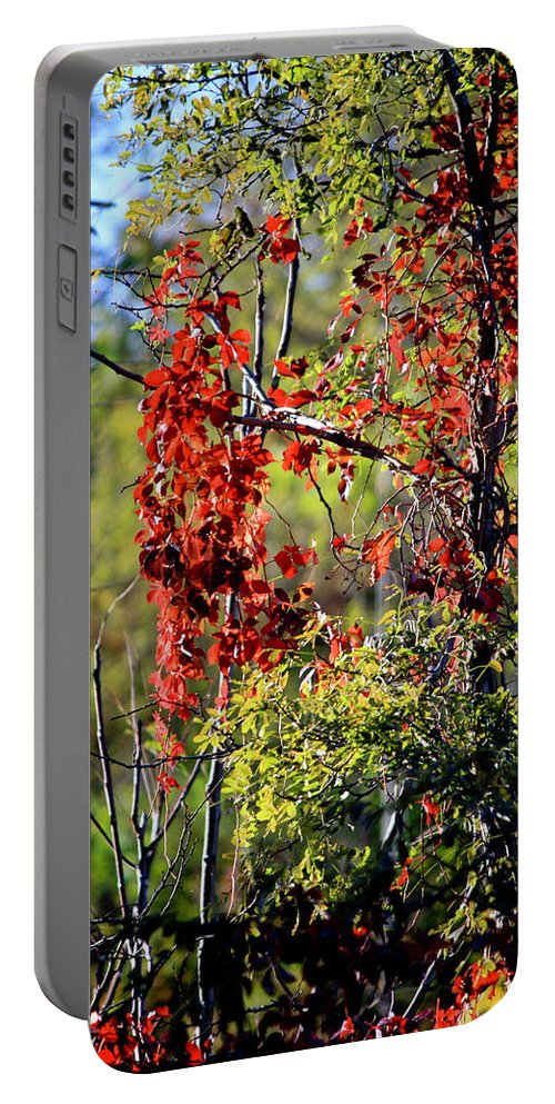 Virginia Portable Battery Charger featuring the photograph Virginia Creeper by Teresa Mucha
