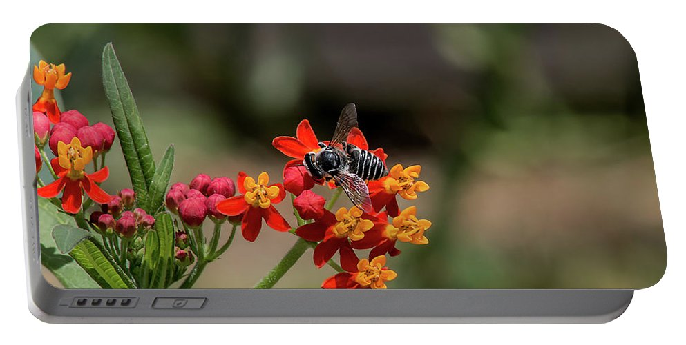 Bee Portable Battery Charger featuring the photograph Visor Wearing Bee Pollinates A Colorful Flower by Sharon Minish