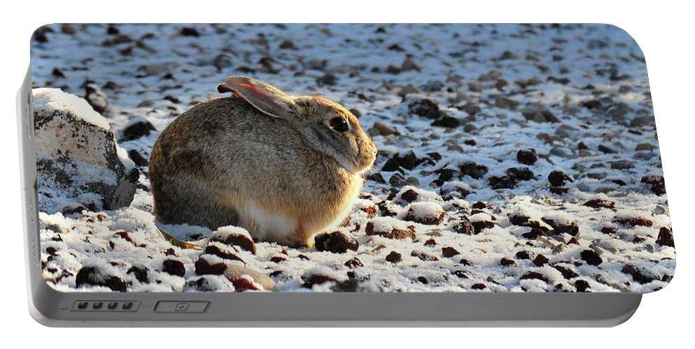 Animal Portable Battery Charger featuring the photograph Wabbit by David Arment