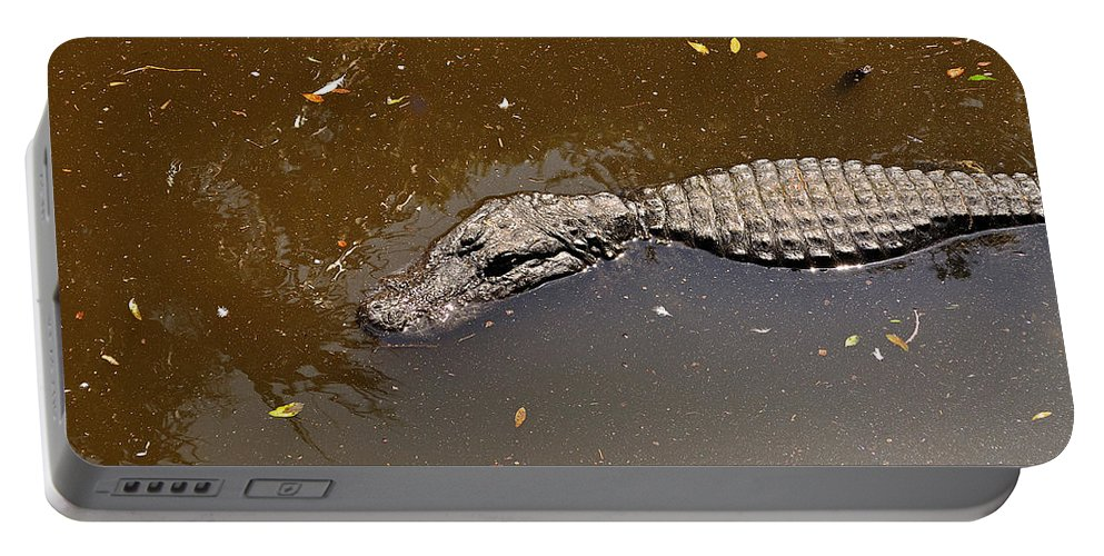 Alligator Portable Battery Charger featuring the photograph Waiting For Lunch by Kenneth Albin